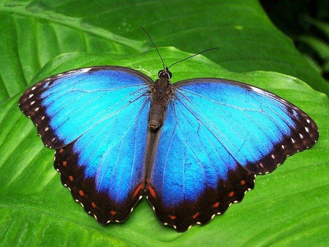 ilustrasi rpph tema kupu kupu