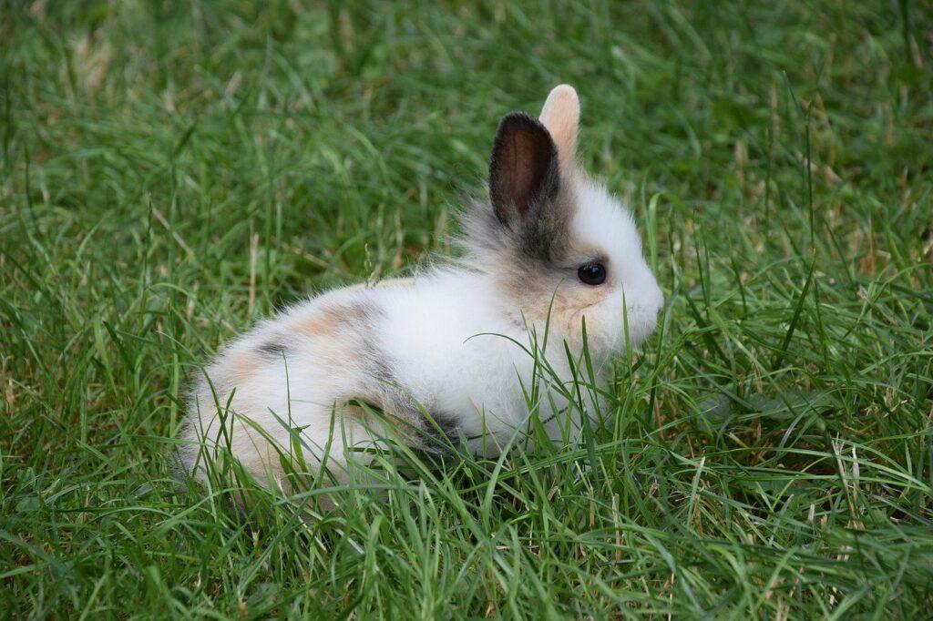 ilustrasi rkh paud tema binatang kelinci